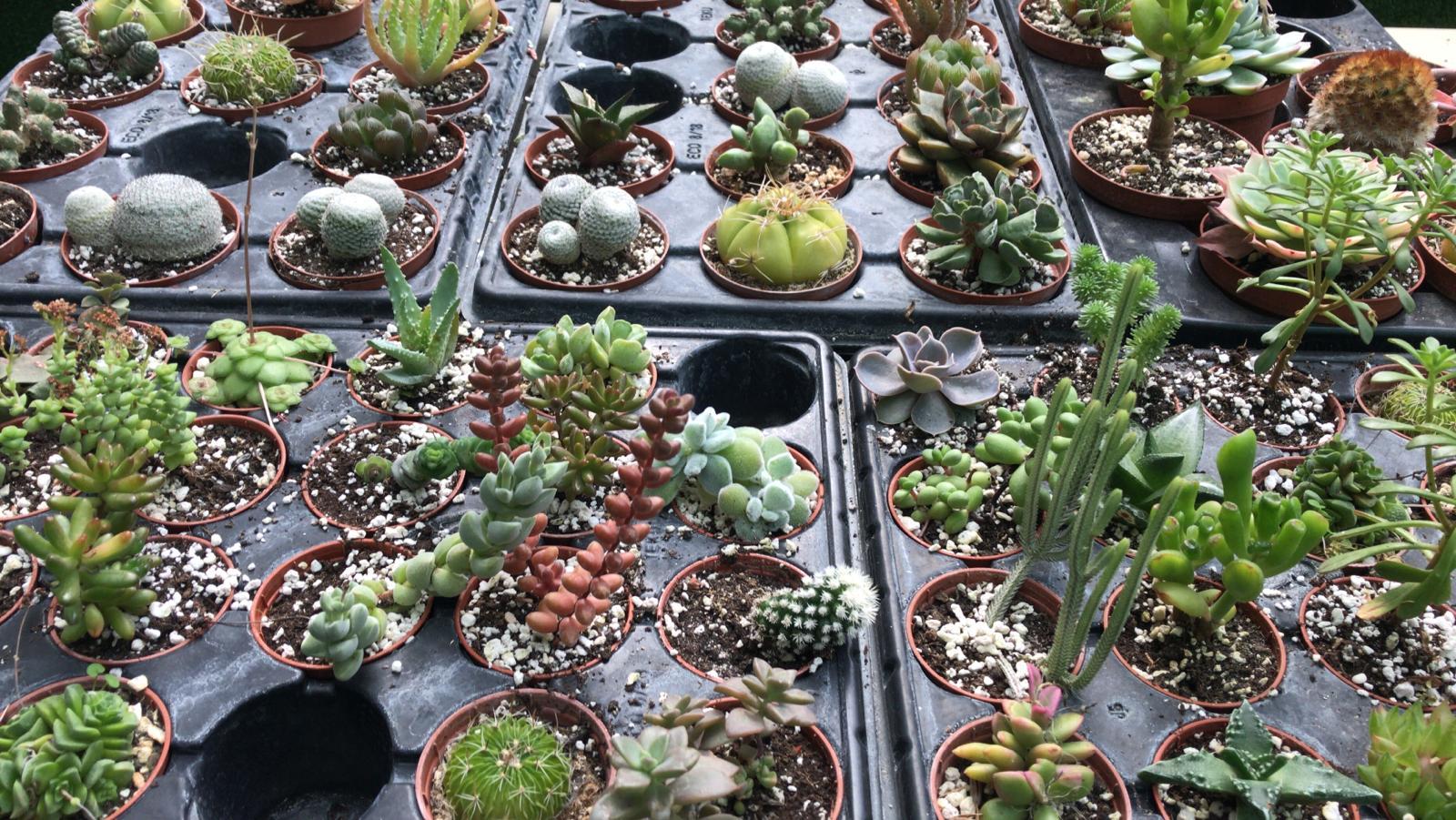 ¡Conoce nuestros cactuses!